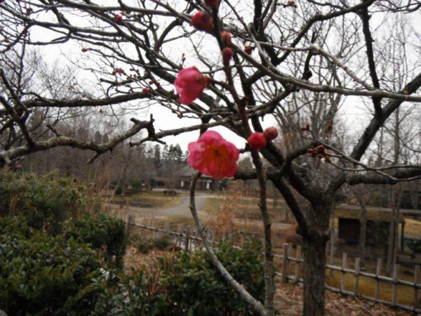 2月6日(水) お花情報