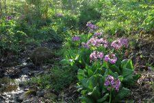 【北地区】自然共生園5月のイベントのご案内