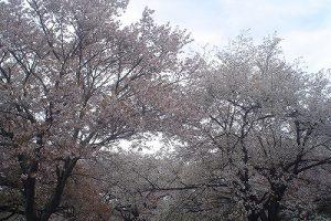 4月25日(木) お花情報