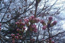 4月7日(日) お花情報