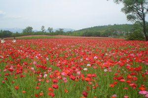 5月31日(金) お花情報(南地区)