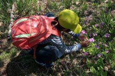【北地区】花野の保全活動イベントのお知らせ