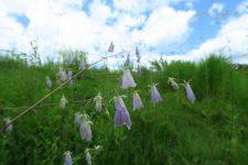 【北地区】自然共生園の花野イベントのご案内