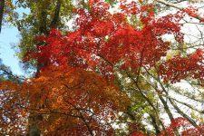 11/2(土) 自然観察イベントのご案内