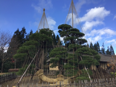 https://michinoku-park.info/media/2020/11/03d3503009ab06af75a6878b871cedfe.jpg
